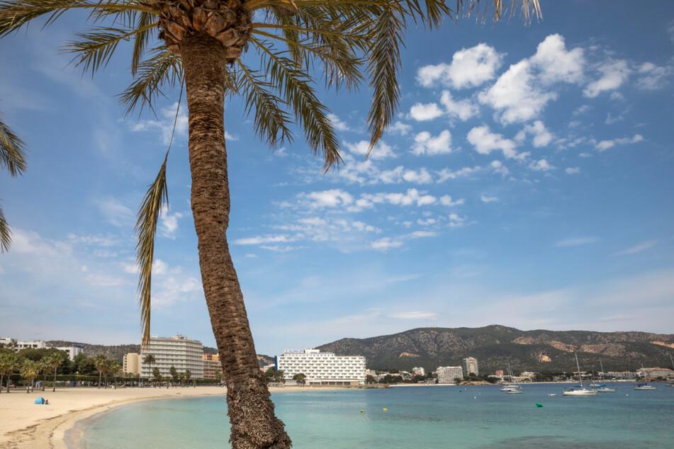 Palmen stehen am fast menschenleeren Strand von Palmanova im Südwesten der spanischen Insel Mallorca.