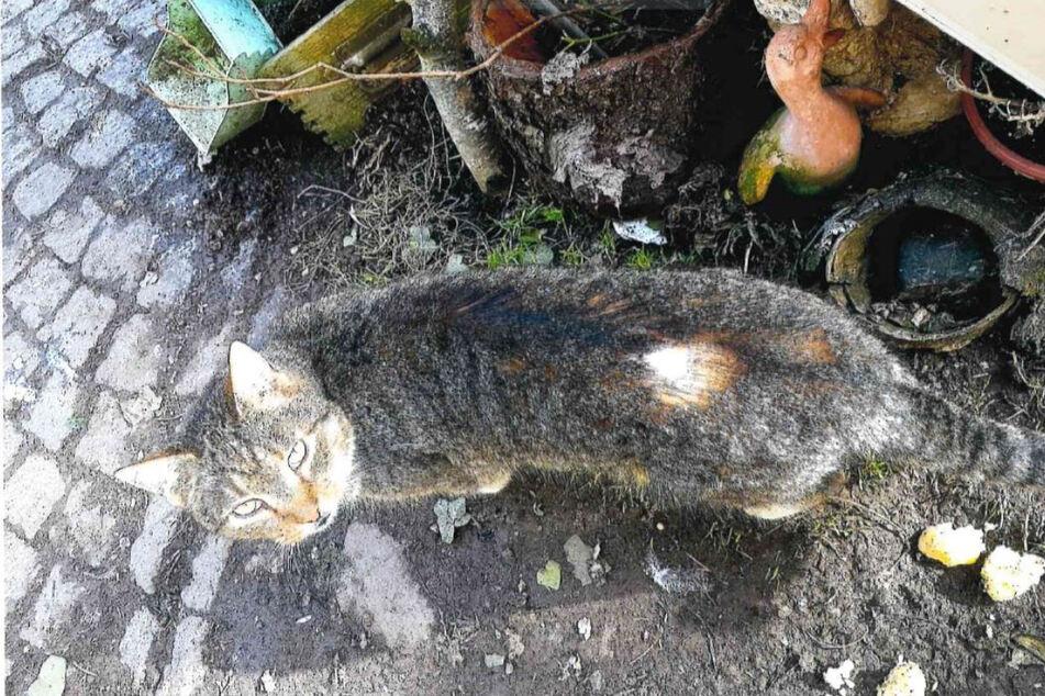 Die Verletzung am Rücken der Katze ist klar zu erkennen.