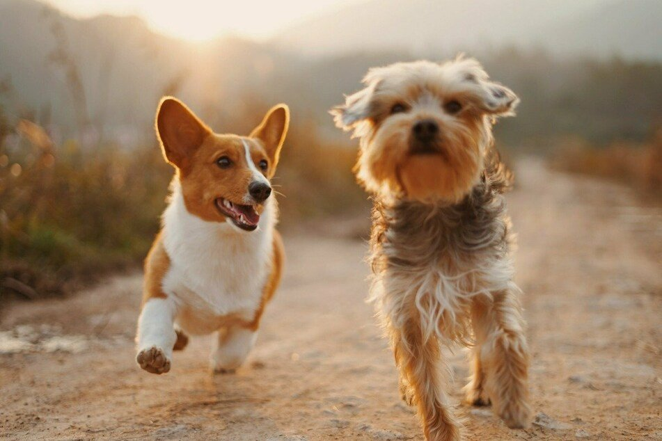Dog news: Interesting, cute and touching stories about our four-legged friends.