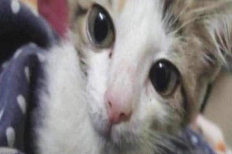 Jungs vergewaltigen Kätzchen, bis es stirbt