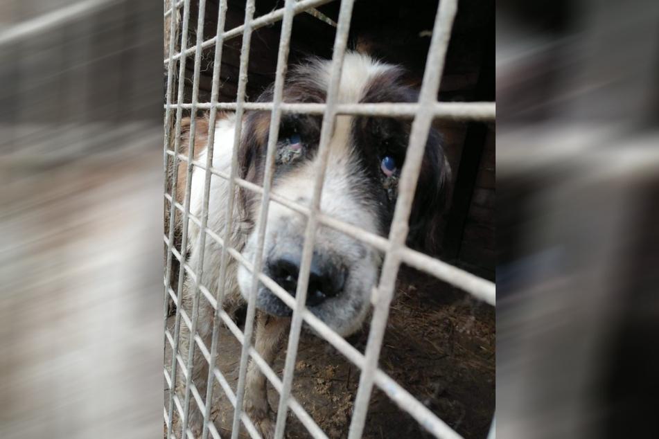 Die Tiere lebten in verdreckten Käfigen...