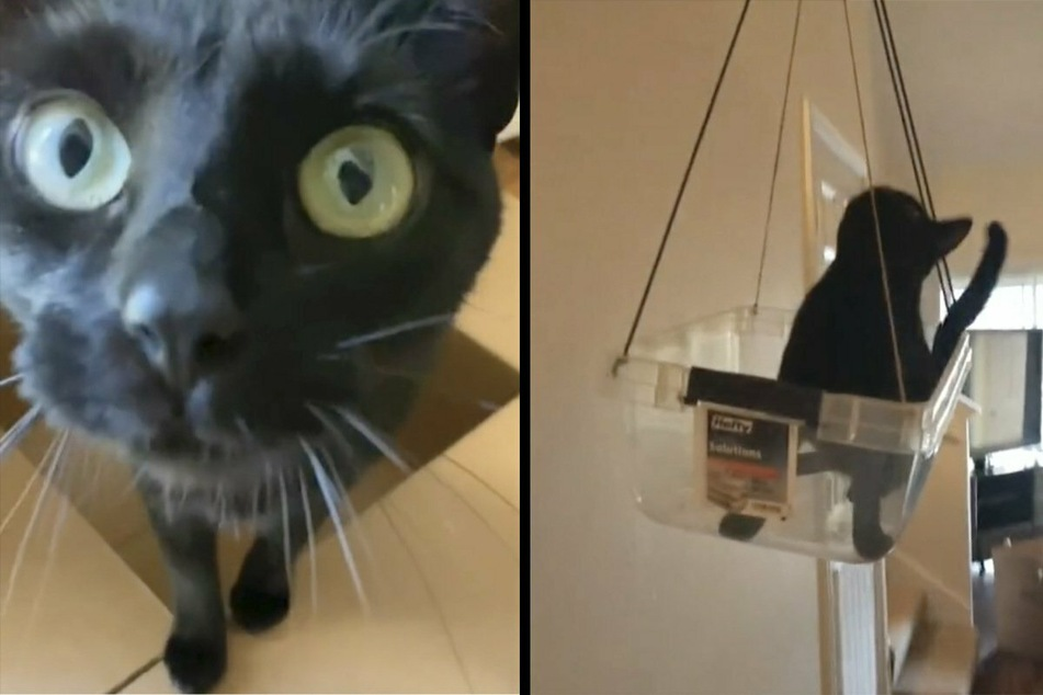 TikTok user lifts everyone's mood with hilarious invention for her cats