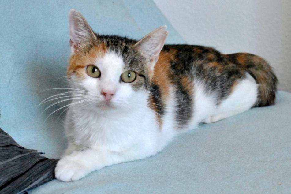 Luna braucht in ihrem zukünftigen Zuhause nicht nur Futter, sondern ganz viel Liebe und Geduld.
