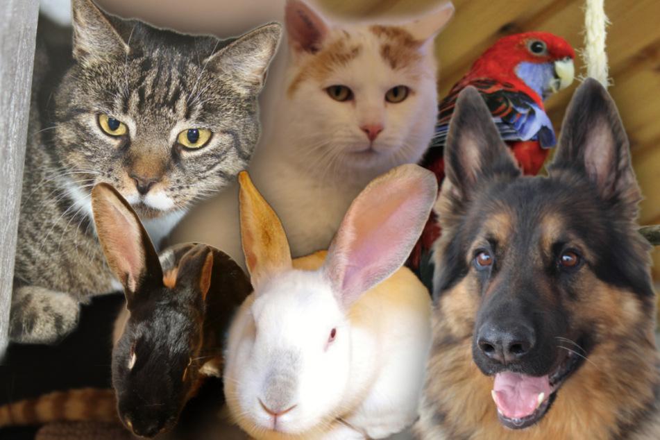 Diese Haustiere suchen liebevolle Besitzer.