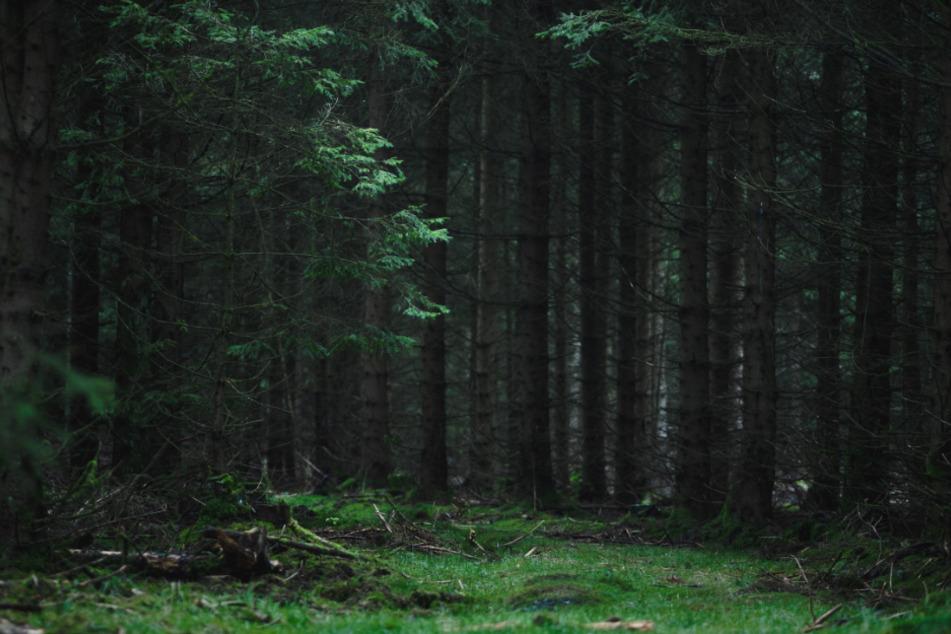 Pilzsammler finden immer wieder Leichen: Wie gefährlich sind Deutschlands Wälder?