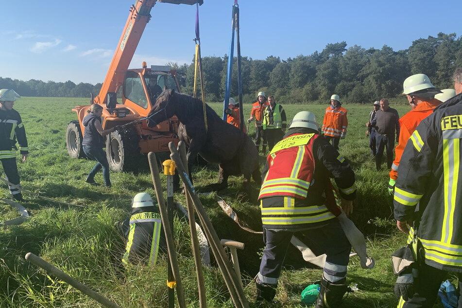 Einsatzkräfte der Feuerwehr bergen das Pferd aus dem Graben.