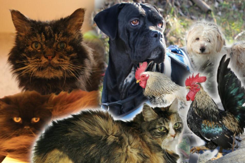 7 besondere Tiere: Diese Hunde, Katzen und Hühner suchen endlich ein Zuhause