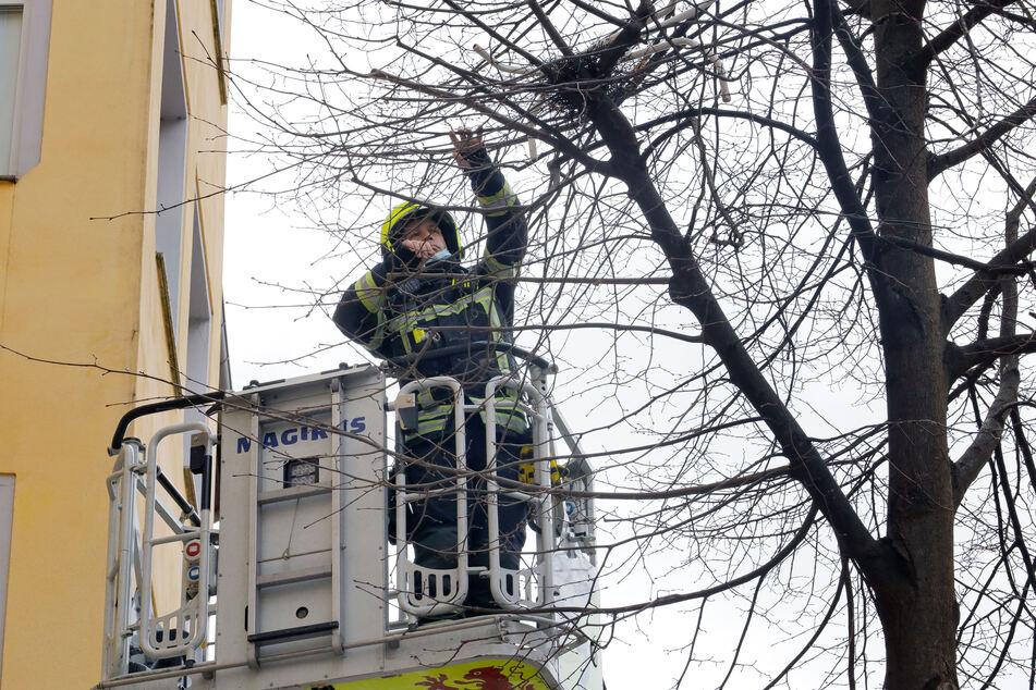 Mit einer Drehleiter holte ein Feuerwehrmann das Tischgestell vom Baum.