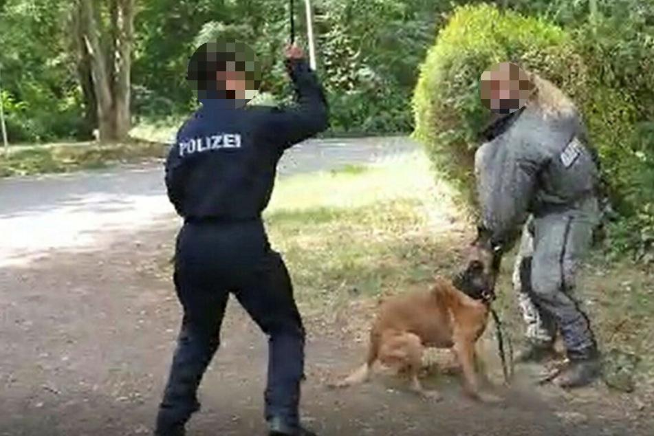Die Hundeführerin hebt den mit Nylon ummantelten Glasfieberstab ...