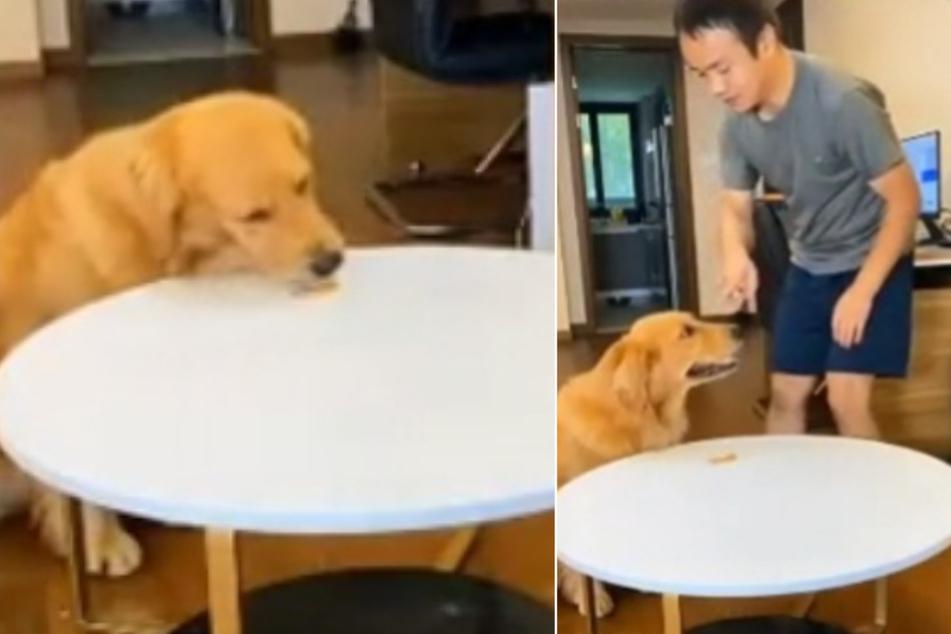 Er will Leckerli! So gerissen trickst ein Hund sein Herrchen aus