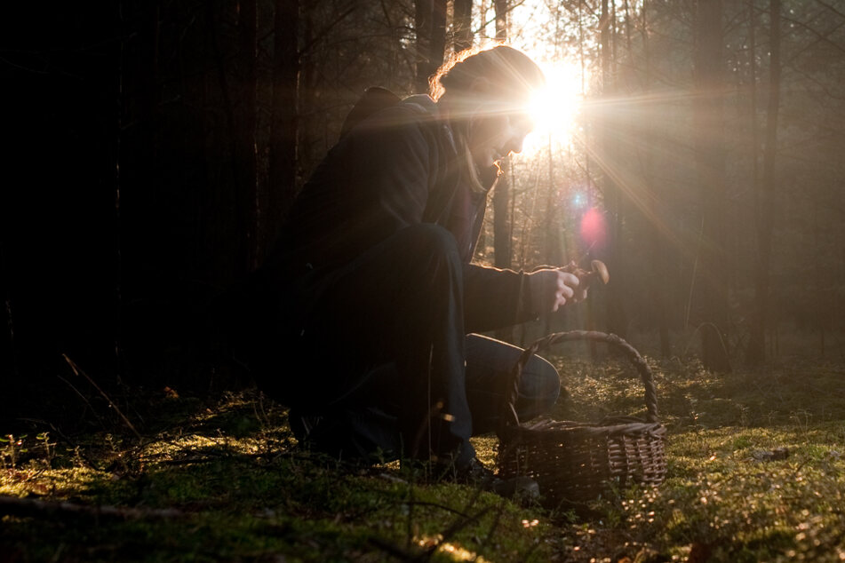 Gammelgefahr: So erkennt Ihr verdorbene Pilze beim Sammeln