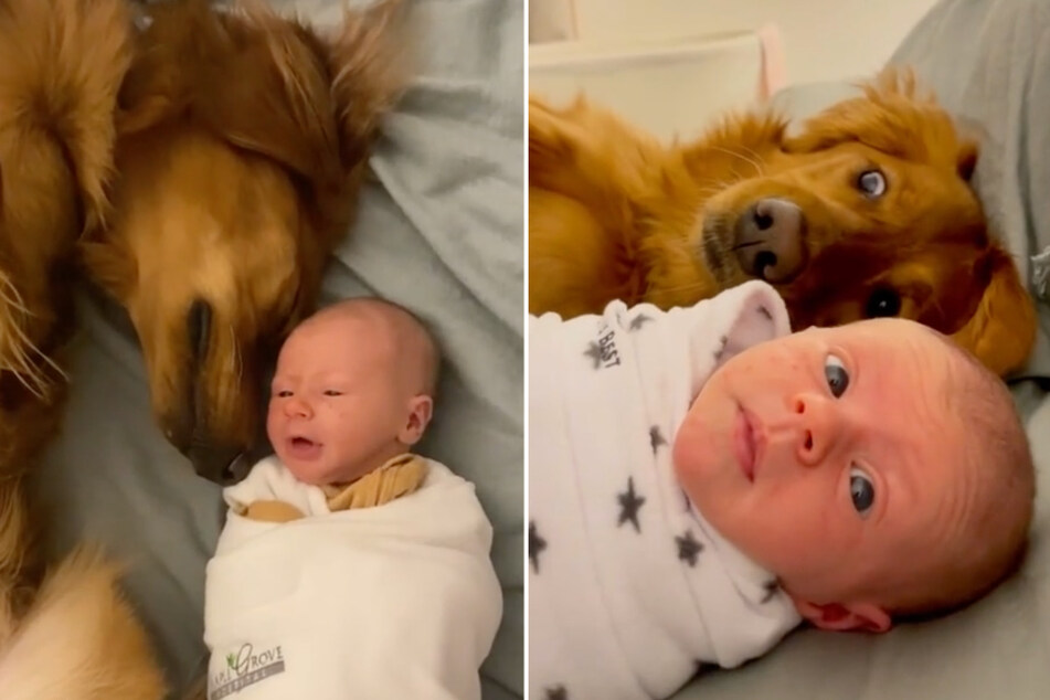 Dog and newborn baby conquer the internet with their love!