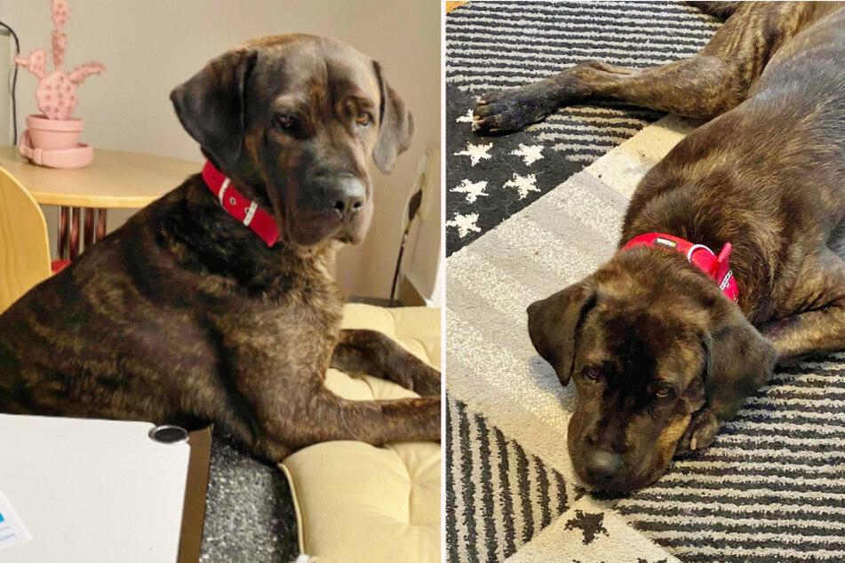 Hund frisst nicht und weint bitterlich im Tierheim: Warum hat sich Bruno aufgegeben?