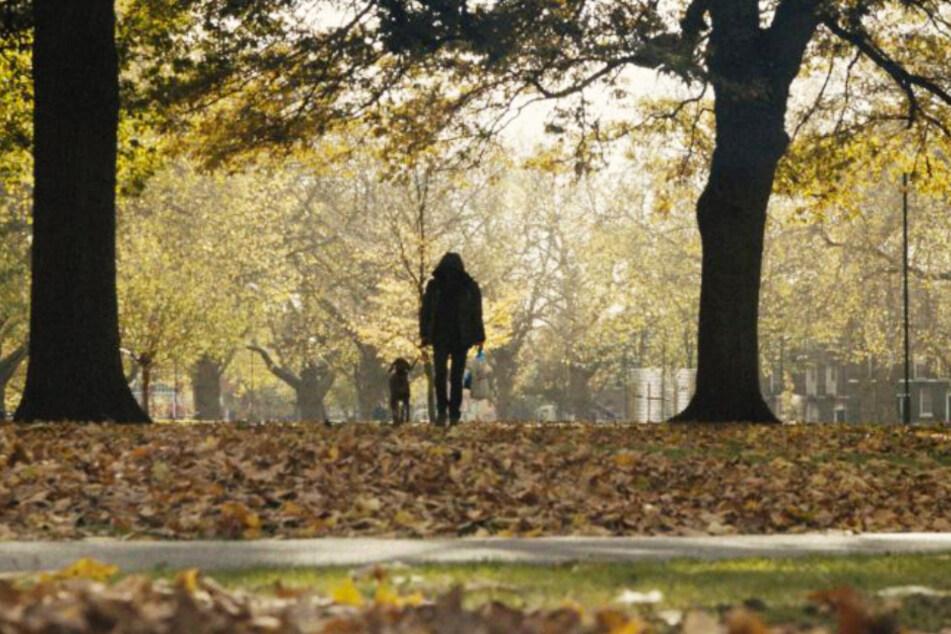 Daniel (Diarmaid Murtagh) geht regelmäßig im Park mit seinem Hund Bruno spazieren.