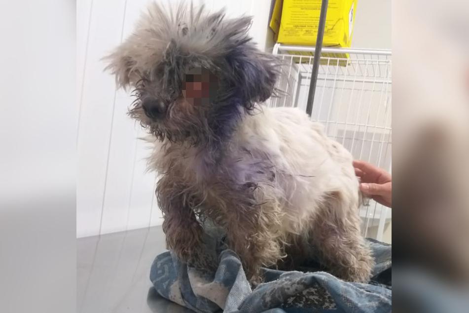 Der Hund war in einem schlimmen Zustand, als er gefunden wurde.
