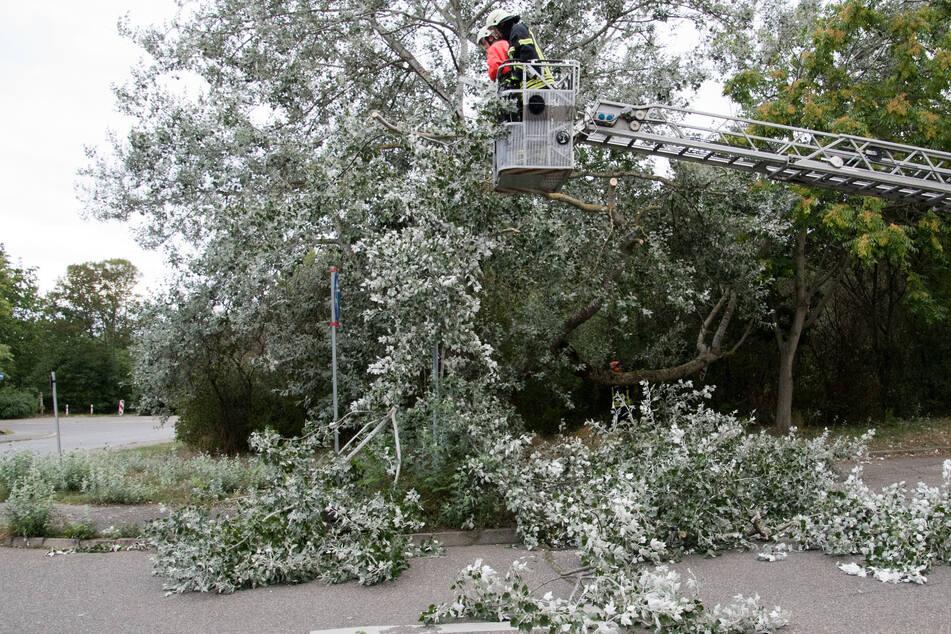 In der Theklaer Straße drohte ein Baum auf parkende Autos zu stürzen. Die Feuerwehr musste die Straße sperren und die gefährlichen Äste absägen.