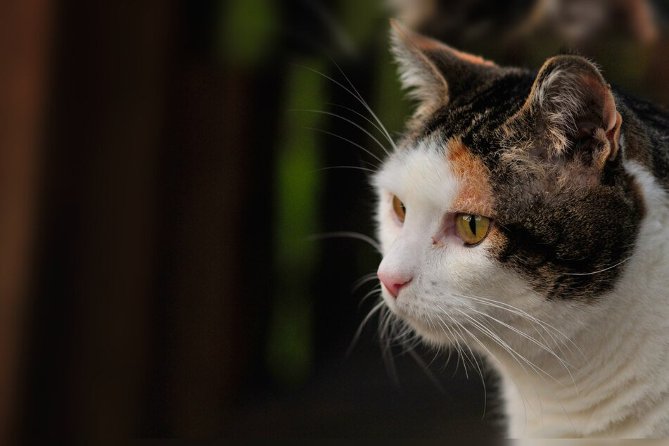 Missing cat survives for weeks after getting stuck behind a wall!