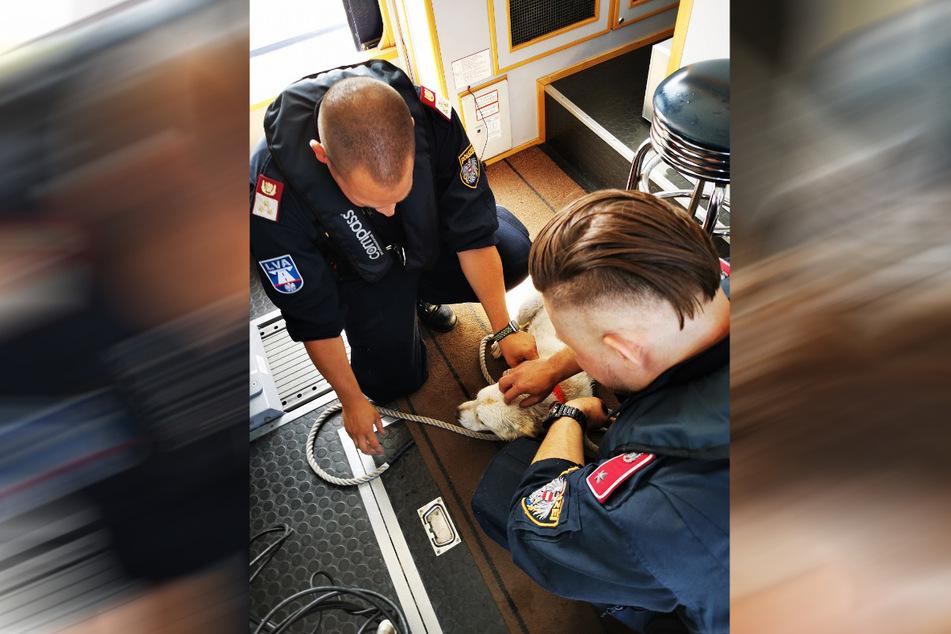 Erschöpft liegt der Hund nach seiner Rettung im Polizeiboot und wird beruhigt.