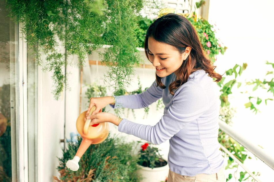 Wer auf Regale, Balkonkästen und Hängetöpfe setzt, kann auch auf kleinen Balkonen viel unterbringen.