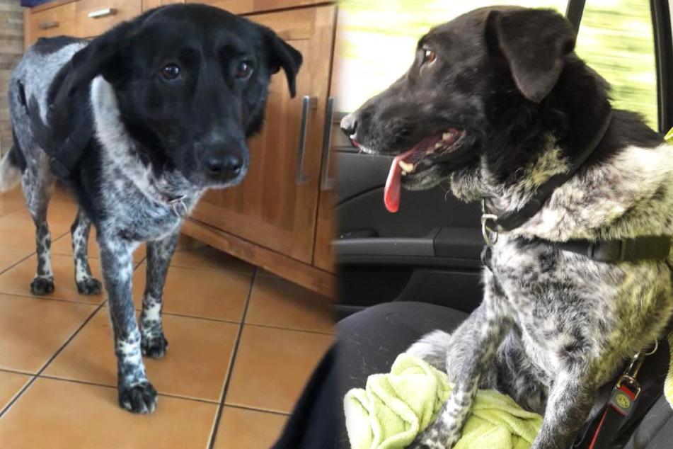 Endlich im Hunde-Glück: Happy End für Tierheim-Tilda!