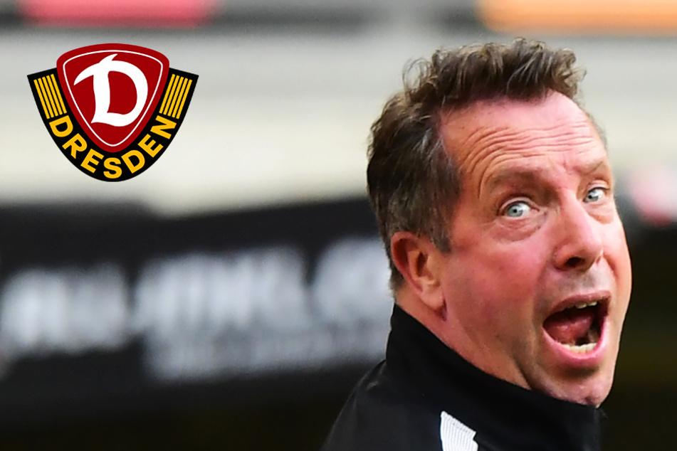 Dynamo kassiert Knockout kurz vor Schluss und verliert gegen den HSV!