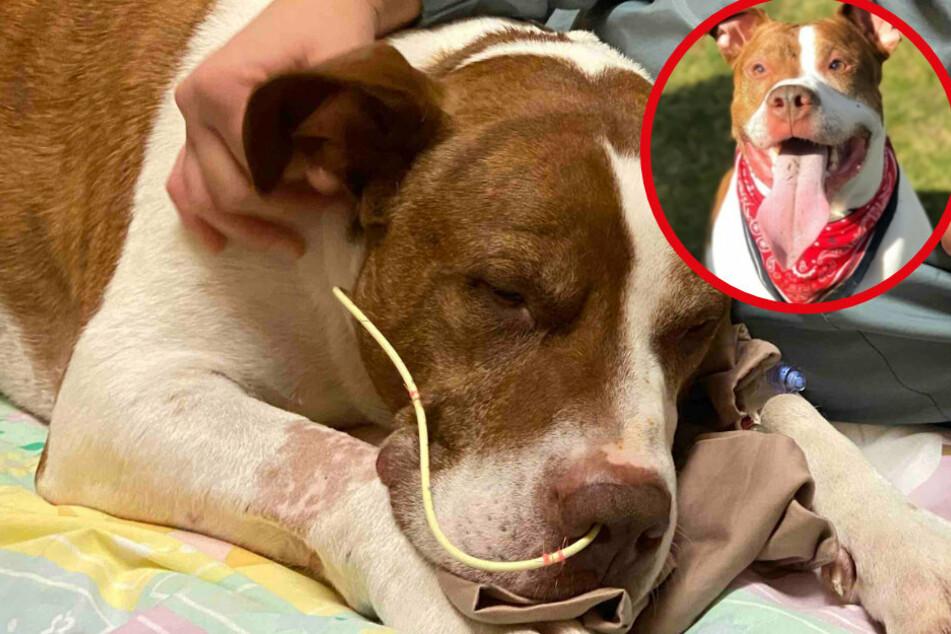 Er war so glücklich! Trauriges Hunde-Schicksal bricht allen das Herz