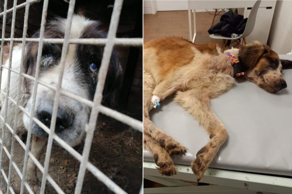 Fast 70 Hunde aus Horror-Zuchtanlage gerettet!