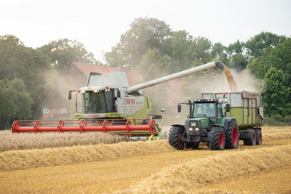 Die Landesregierung will bis zum Jahr 2030 den Flächenanteil des Ökolandbaus auf 20 Prozent erhöhen.