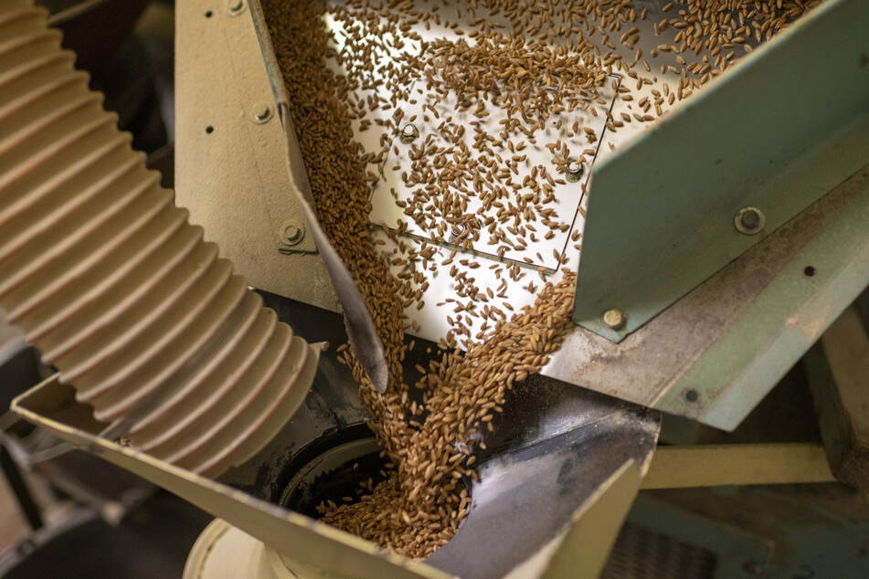 In der Mühle wird Korn zu Mehl gemahlen. 40 Tonnen Getreide laufen täglich durch die letzte Mühle im Erzgebirge.