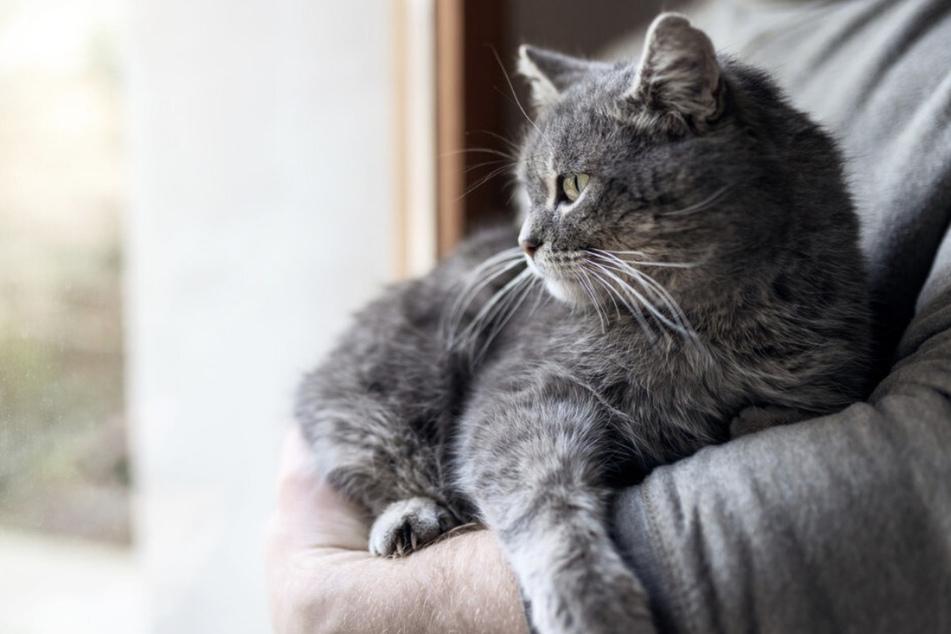 Tierheim fassungslos: Passanten entdecken gehäutete und gestückelte Katze