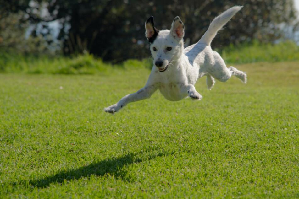 7 Tipps für den hundefreundlichen Garten: So fühlen sich die Vierbeiner richtig wohl!