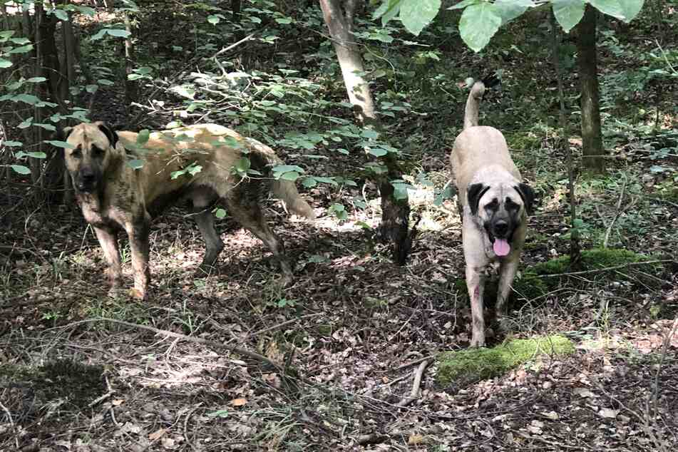 Autofahrer sehen zwei Hunde im Wald herumlaufen: Polizei deckt traurige Wahrheit auf