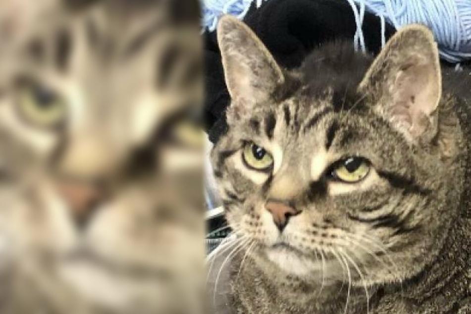 Berühmte Katze gestorben! Was es mit ihr auf sich hatte