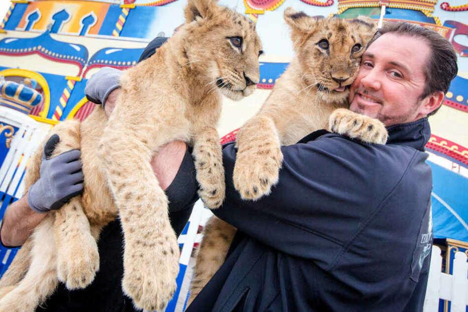 Star-Dompteur Martin Lacey junior mit seinen Tieren. (Archiv)