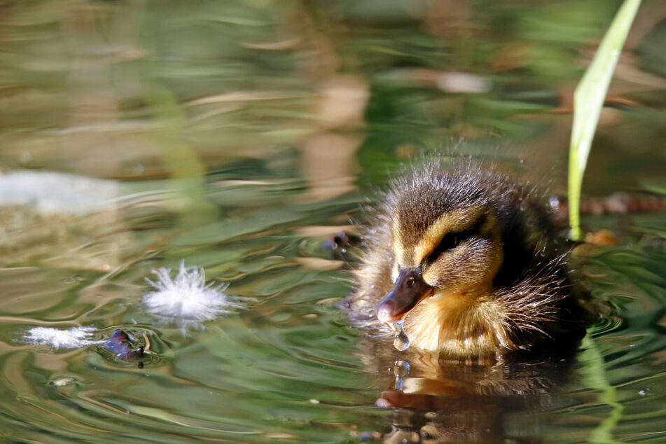 New report reveals the incredible number of birds saved by the Clean Air Act since 1970