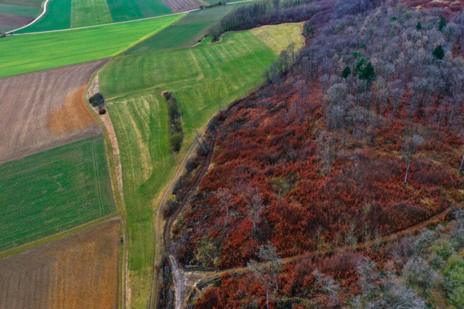 Verwaldung der Berge: Warum sind zu viele Bäume ein Problem?