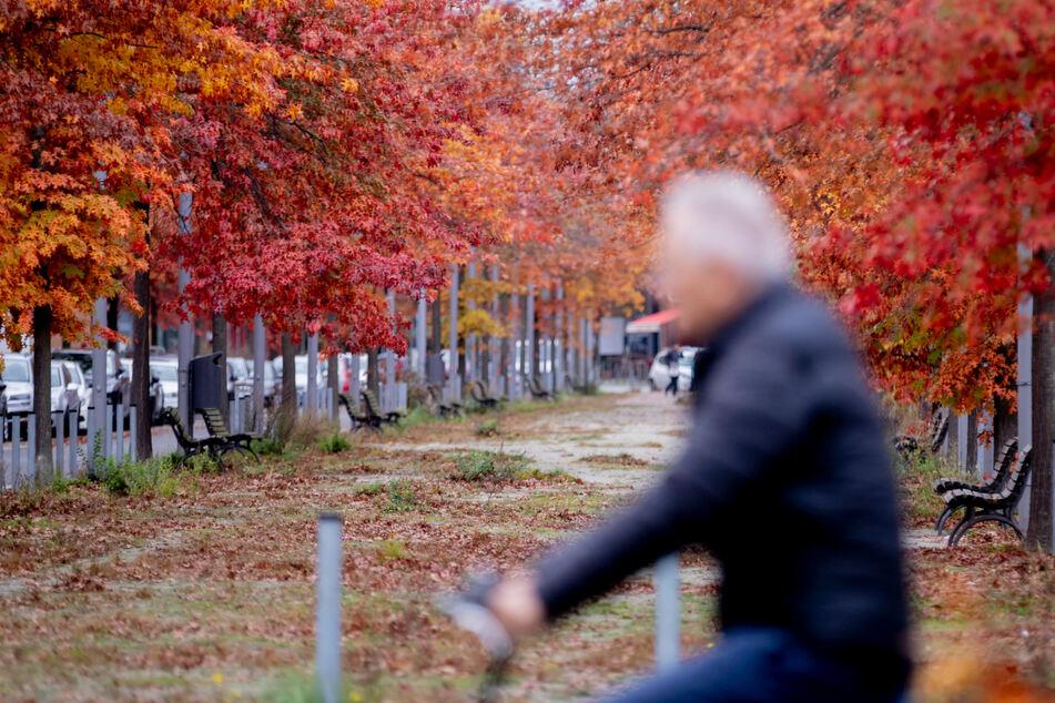 """Letztes Oktober-Wochenende verspricht """"Hauch von Goldenem Oktober"""""""