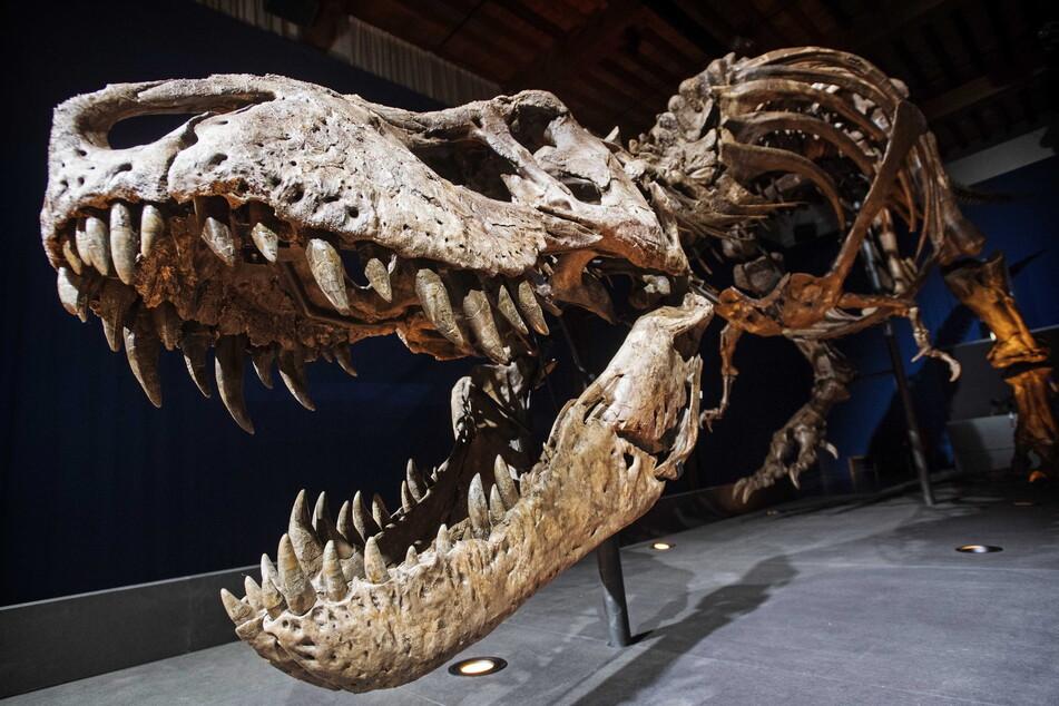 Dinosaurier Züchten