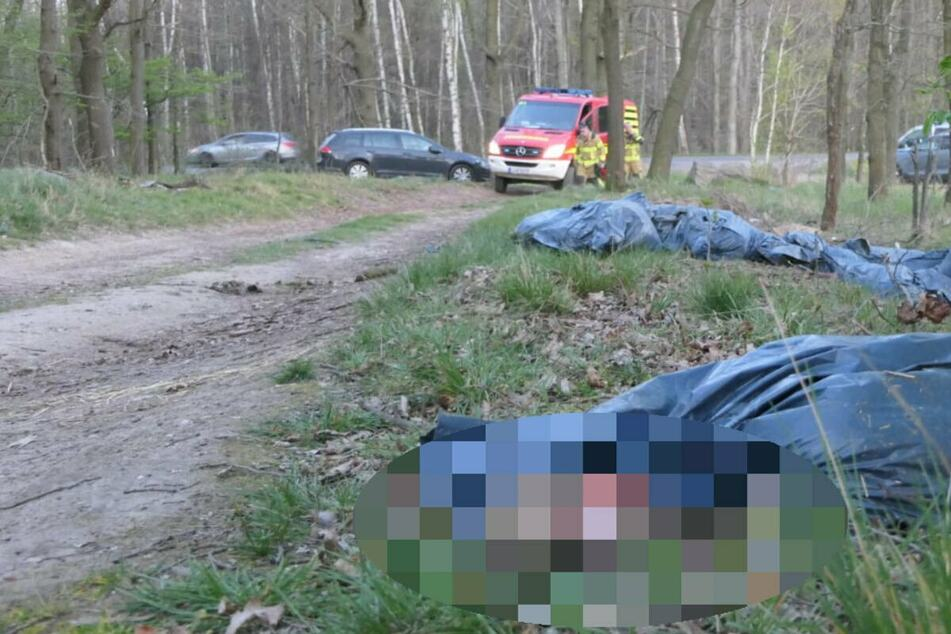 Verpackt in Müllsäcke wurden vergangene Woche die Überreste von 28 toten Lämmern in einem Wald bei Grimma entdeckt.