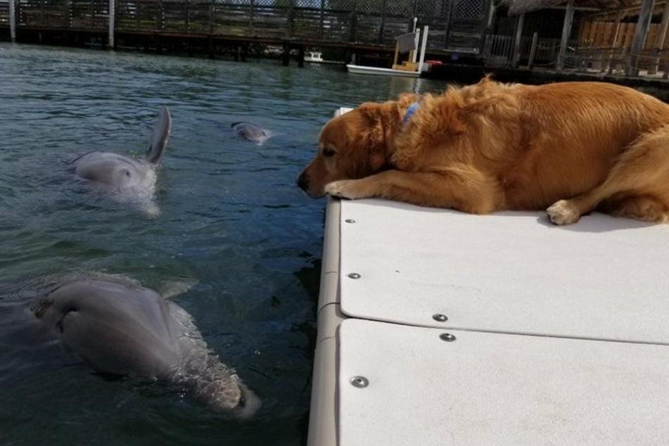 Hund Gunner schaut seinem Freund Delta gerne beim Planschen zu.