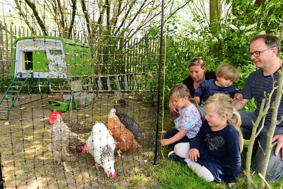 Jacky (h.) und Jan Rassek (r.) füttern mit ihren Kindern Ella (l.), Amelie (v.) und Louie (m.) ihre Miethühner.