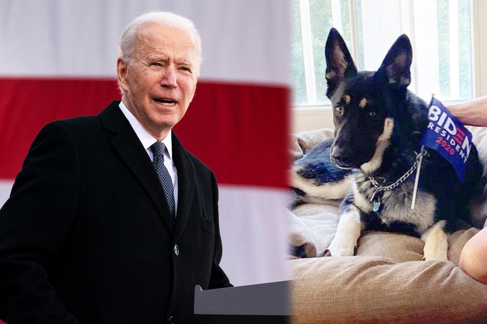 """Joe Biden (78) und sein Hund """"Major""""."""