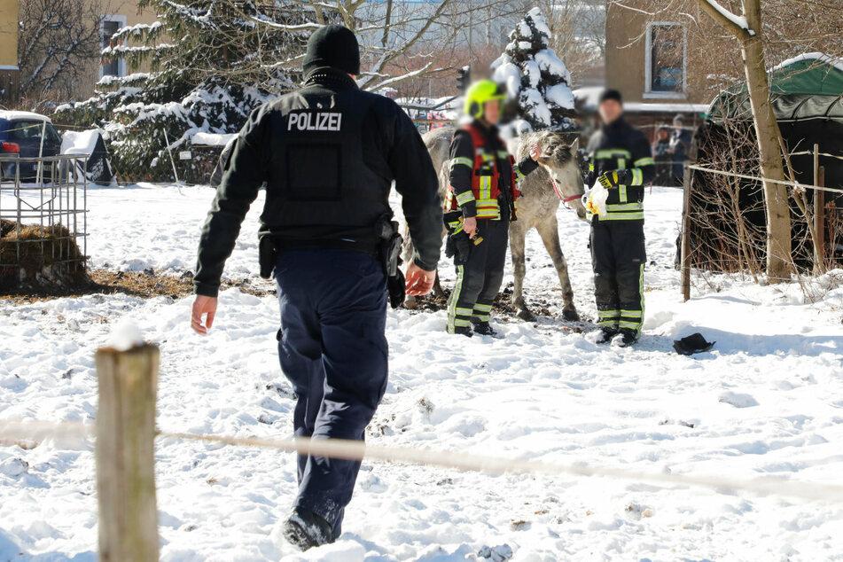 Chemnitz: Pferd eingeklemmt und verletzt: Feuerwehreinsatz in Chemnitz