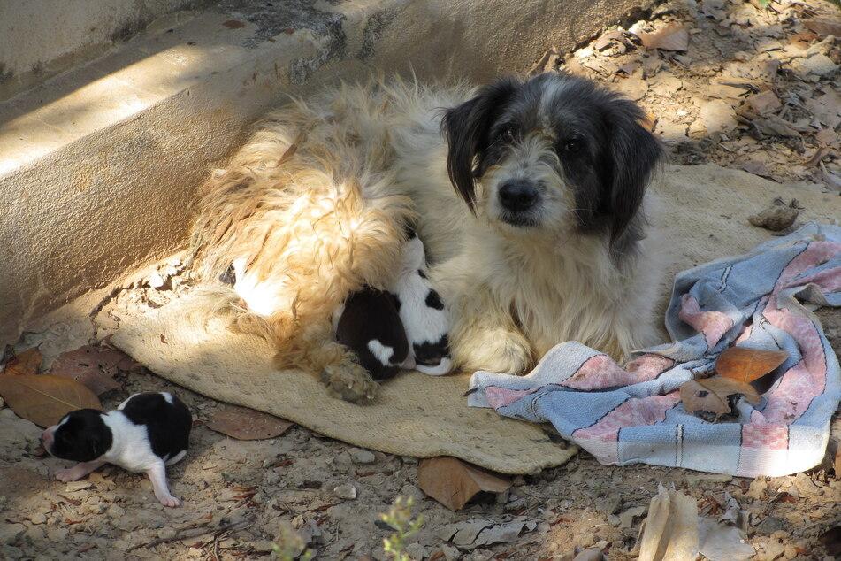 Viele Tiere müssen aufgrund von Falschmeldungen gerade um ihr Zuhause fürchten.