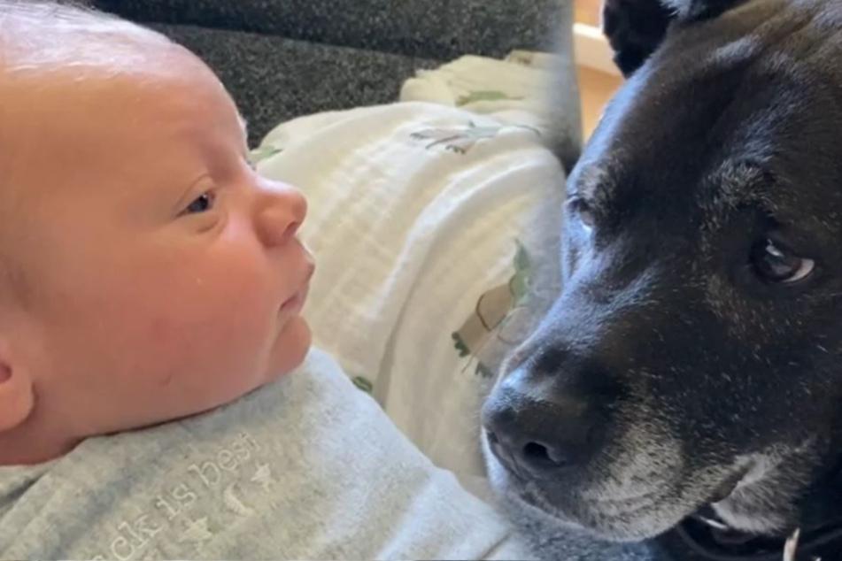 Was machen die da? Hund und Baby brechen allen das Herz!