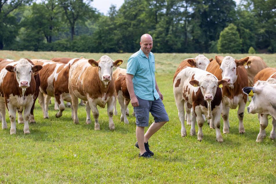 Falk Lohmann (44) ist stolz auf sein Simmentaler Fleckvieh. Mit der jetzt erhaltenen Auszeichnung kann der Landwirt das auch.