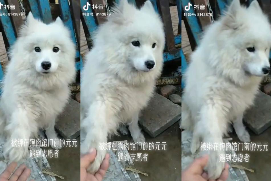 Unsicher und ängstlich sah dieser Hund aus.