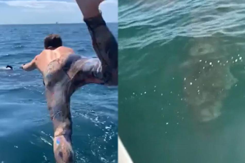Mann glaubt, mit harmlosem Riesenhai zu schwimmen, dann bricht Panik aus