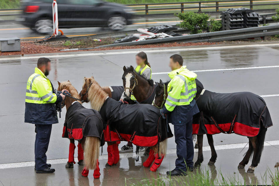 Die Pferde wurden am Fahrbahnrand in Sicherheit gebracht und von Helfern betreut.