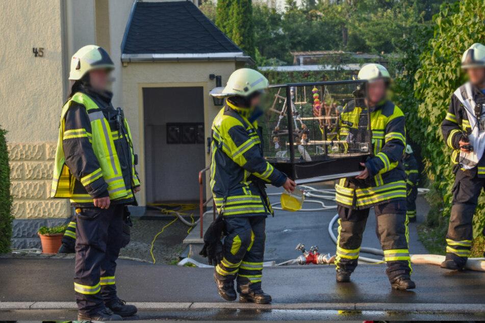 Dachstuhlbrand in Mehrfamilienhaus: Wellensittiche gerettet
